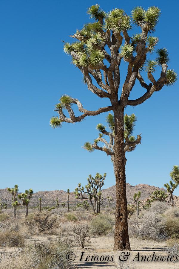 Joshua Tree National Park-3