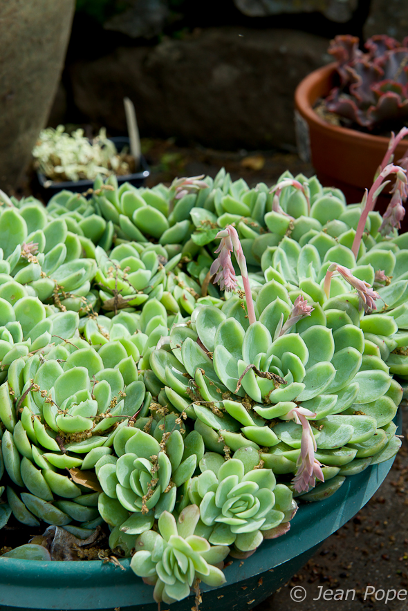Succulents 031016-5