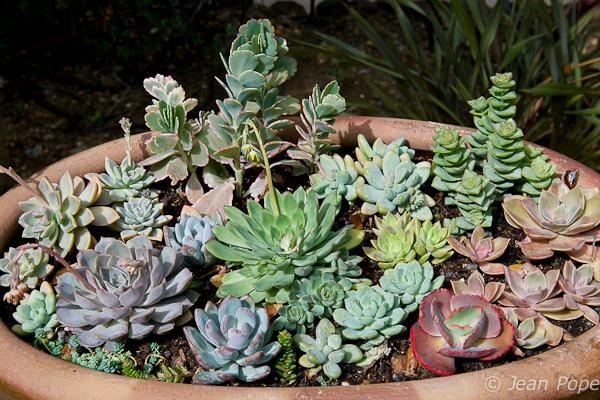 Succulents 031016-7