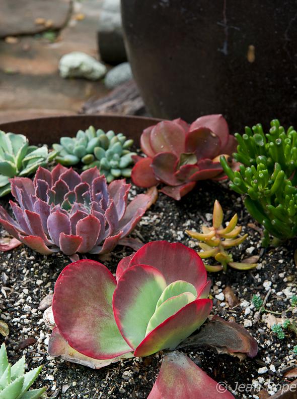 Succulents 031016-9