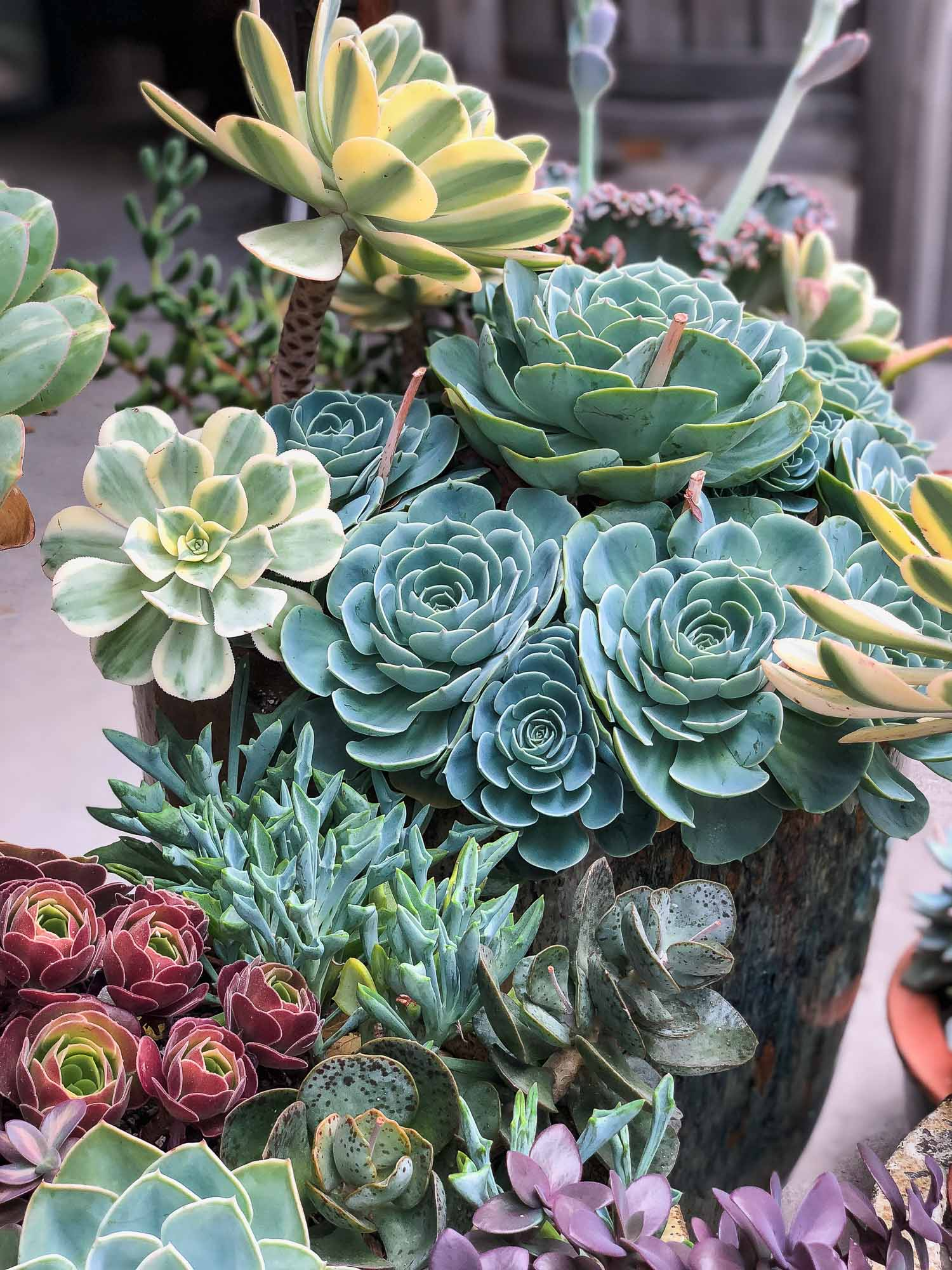 In General, Succulents Love Rain Water And Seem Less Prone To Rot When  Compared To Receiving The Same Amount Of Water From A Garden Hose.